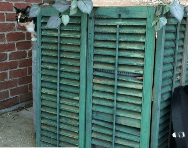 Chic shutters to hide ac unit